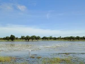 wetlands outside of town 4 (website)